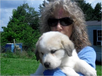 Beatuiful FEMALE GREAT PYRENEES