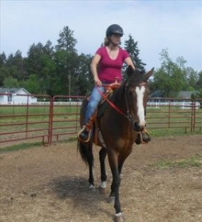 Gorgeous Horse for Adoption