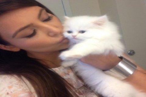 Hansom little Persian Kitten for good home