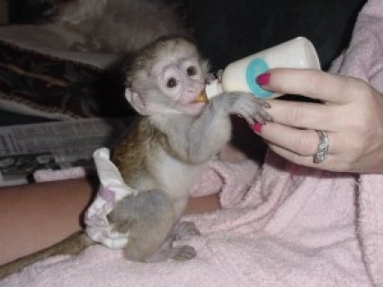 i have one female capuchin monkey ready for a good and loving ho