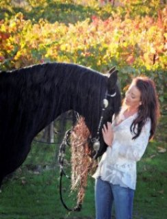 صور healthy talented friesian horse for sale 1