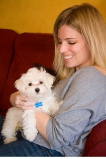 Wow Wow Teacup Maltese puppies for adoption	1