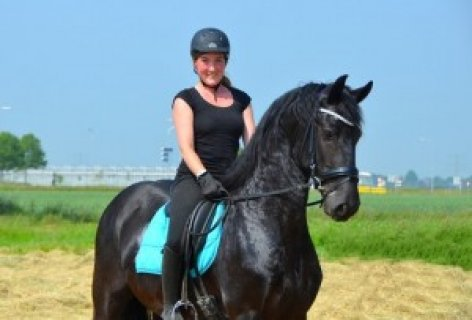 7 Years Old Terrific Moving Gelding - Also Safe in Trafficwss
