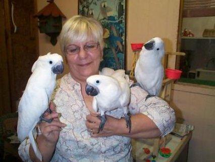 Cuties Cockatoos Parrots For Sale