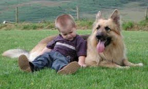 تدريب كلاب الامن والحراسة.