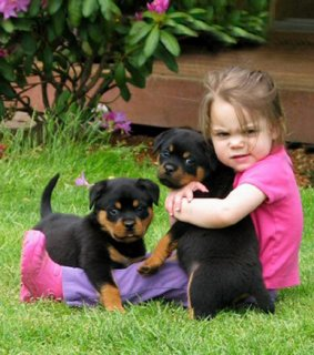 Rottweilers for Adoption