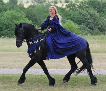 New Friesian Horse Available For Adoption