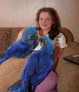 Sweet Pair of male and female Hyacinth Macaws for Sale