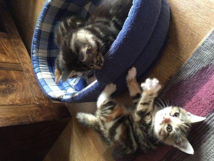 lovely Kittens good for adoption