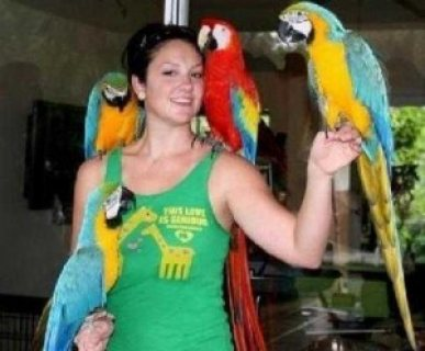 Beautiful and Talking Hyacinth Macaw Parrots for Adoption