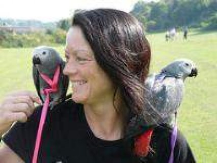 African grey parrots for sale/.././