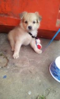 It cute , hyper active and need friends , 2 months . Grey colou