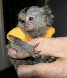 I need a new home for my marmosets