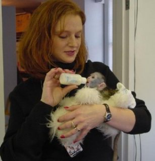 Capuchin Monkey For You