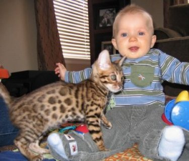 Male And Female Bengal kittens For Sale Now Ready To Go Home....