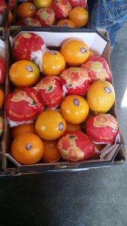 برتقال ابو صرة وارد مصر