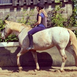 Confident well mannered 14.2hh mare for sale Teenagers Dream