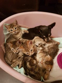Beautiful Kittens For Adoption