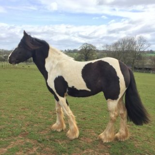 Beautiful Horses Available For Sale