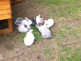 Beautiful Baby Rabbits Need New Home