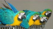Very nice macaw parrots for sale at good prices so contact for m
