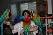 Cute Pair Of Macaw Birds